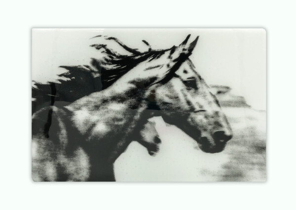 Closeup photo of Marque