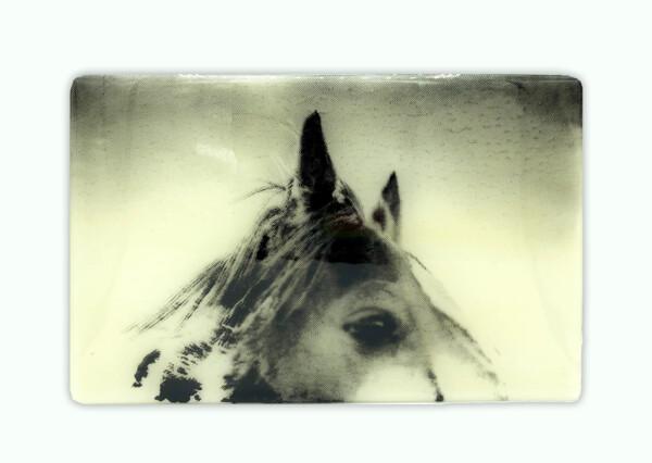 Closeup photo of Pony Wish