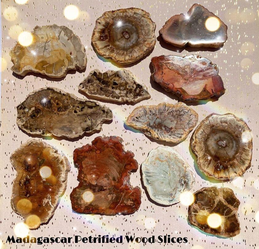 . Petrified Wood