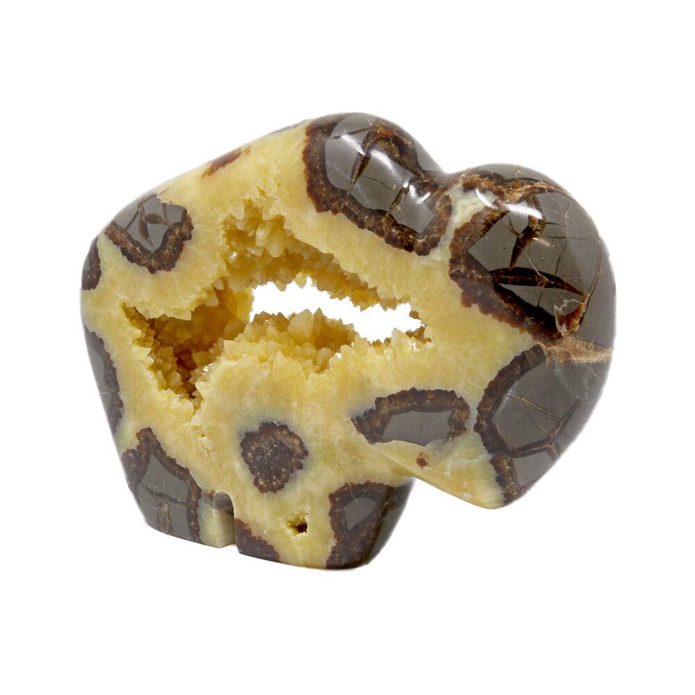 Septarian Buffalo With Druze Pocket From Utah