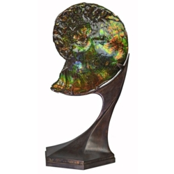 Closeup photo of Ammonite And Ammolite Fossil In Custom Spinning Futuristic Stand