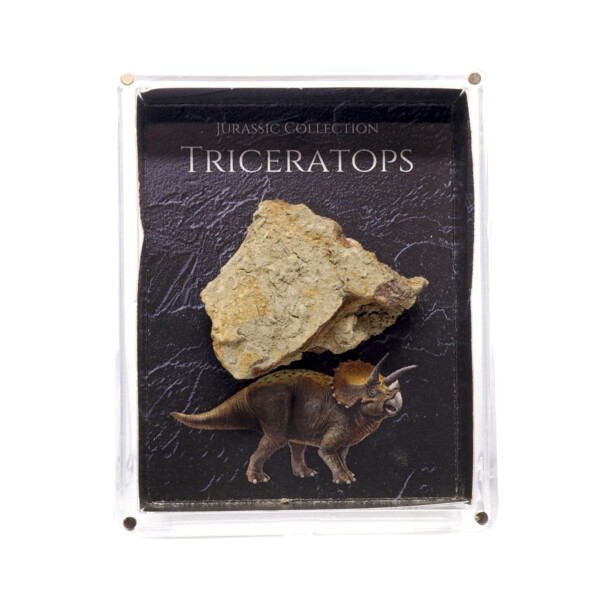 Closeup photo of Jurassic Collection - Triceratops Dinosaur Fossil