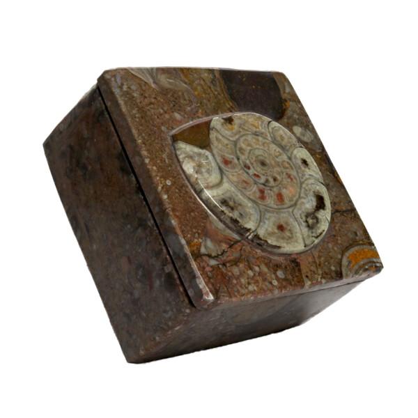 "Closeup photo of Ammonite Fossil Box 3.5"""