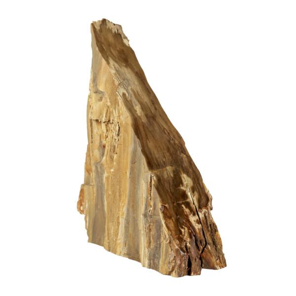 Closeup photo of Saddle Mountain Washington Petrified Wood Sculpture -Cypress