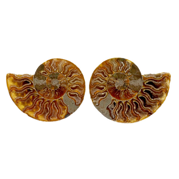 Closeup photo of Ammonite Fossil Pair In Acrylic Stands - Druze Cavities