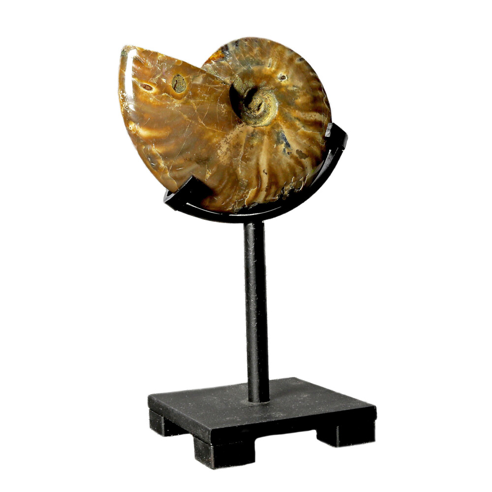 Opalized Ammonite On Custom Post Stand