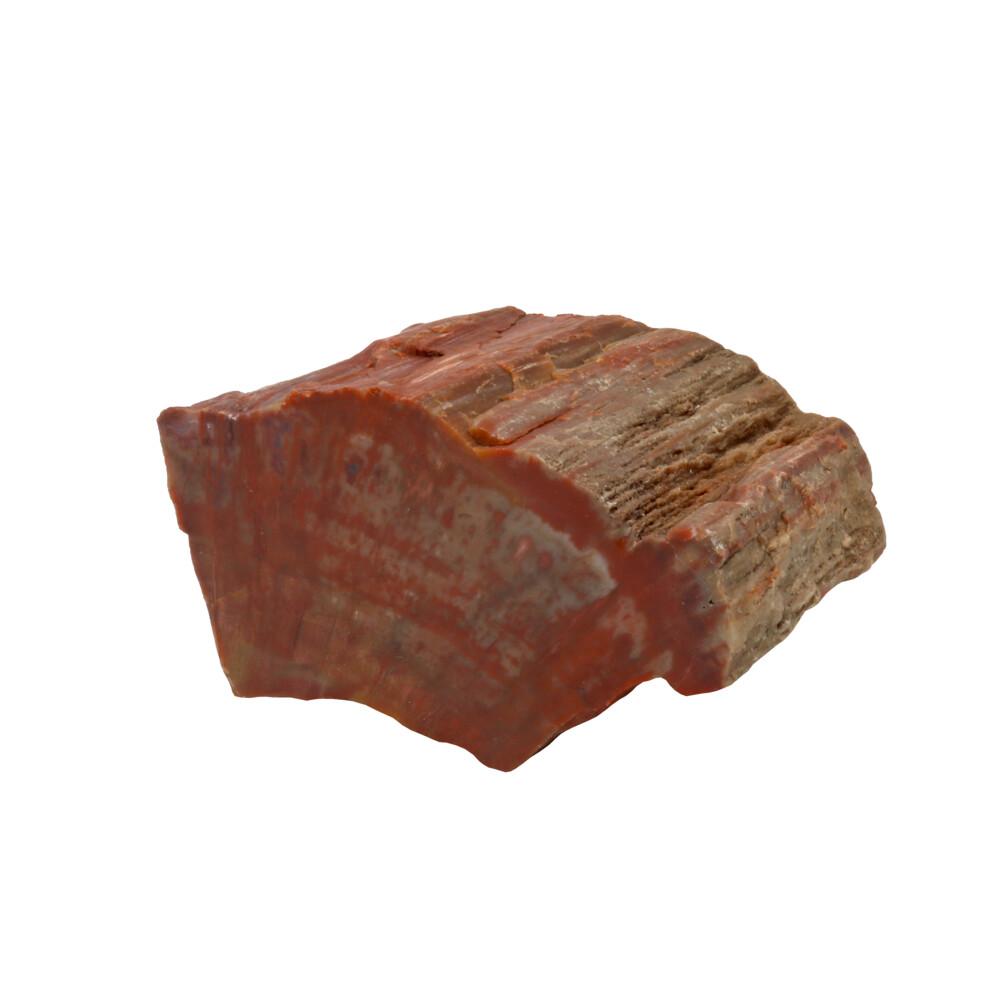 Arizona Petrified Wood Chunk -Polished Side