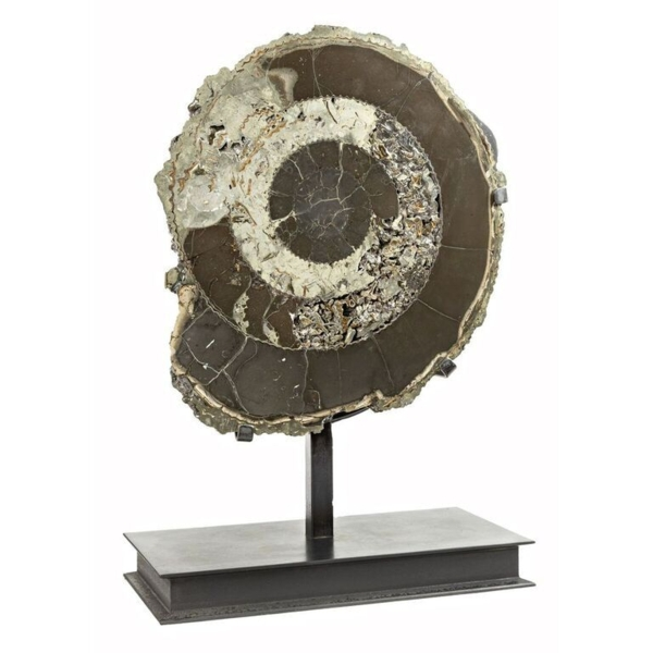 Closeup photo of Pyritized Ammonite Half from Russia In Custom Stand