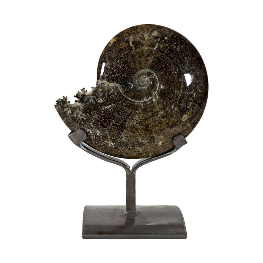 Ammonite Fossil Whole - Sutures On Custom Stand
