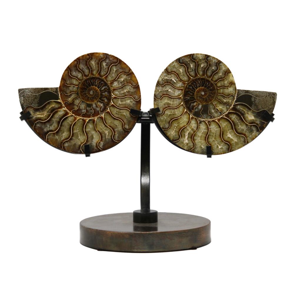 Ammonite Fossil Pair On Custom Metal Stand