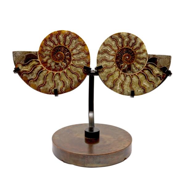 Closeup photo of Ammonite Fossil Pair On Custom Metal Stand