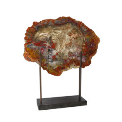 Closeup photo of Arizona Petrified Wood Slice On Custom High H Stand