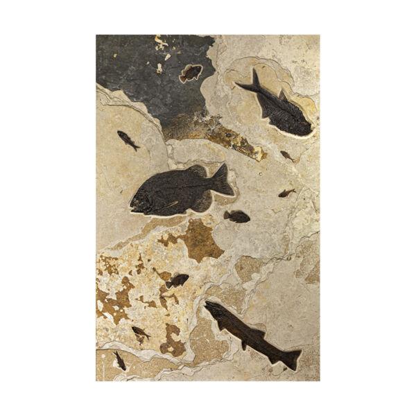 "Closeup photo of Wyoming Fish Wall Panel 80"" X 48"""