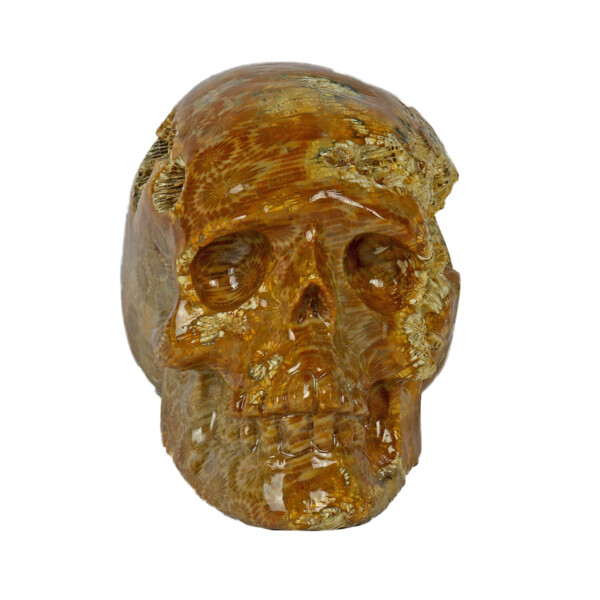 Closeup photo of Fossilized Coral Skull Small